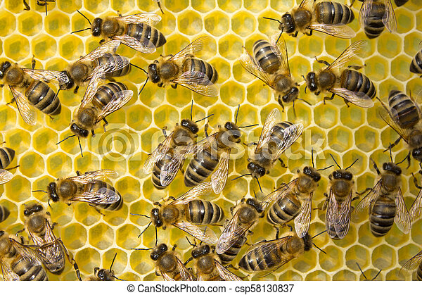 Bees build honeycombs. Work in a team. - csp58130837