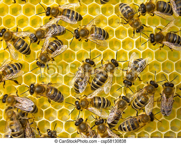 Bees build honeycombs. Work in a team. - csp58130838