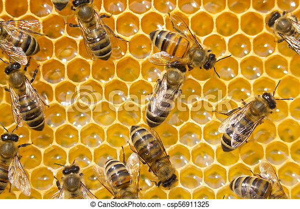 Bees on honeycombs. Bees work in a team. - csp56911325
