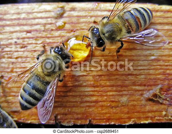 Bees take away the drop of honey. - csp2689451