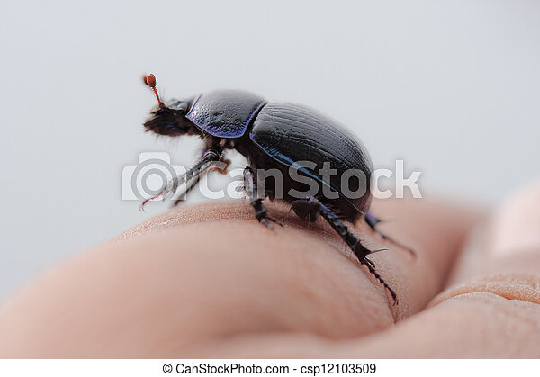 beetle on a finger - csp12103509