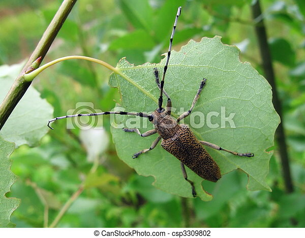 Beetle on leaf - csp3309802