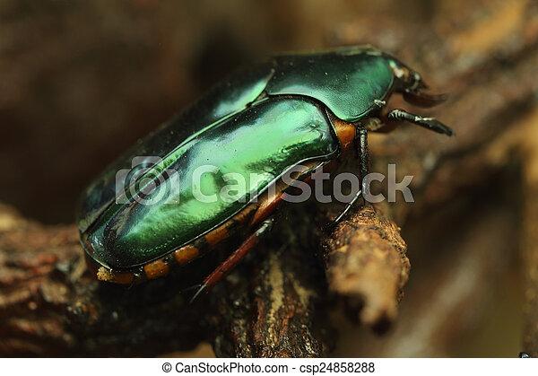 Beetle on wood - csp24858288