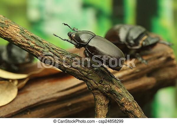 Beetle on wood - csp24858299