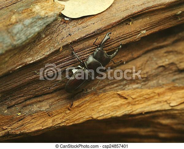Beetle on wood - csp24857401