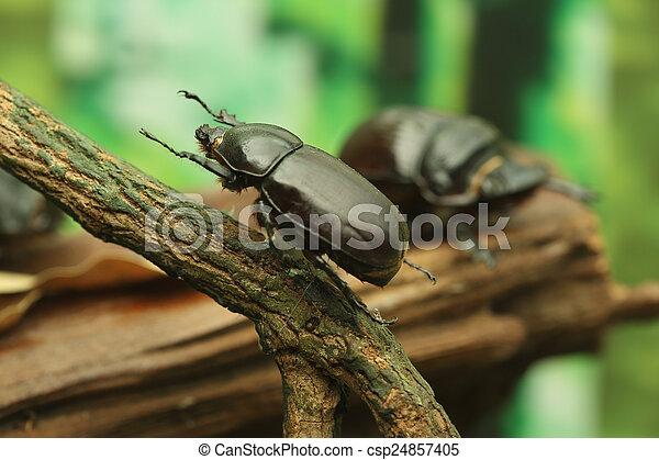 Beetle on wood - csp24857405