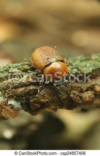 Beetle on wood - csp24857406