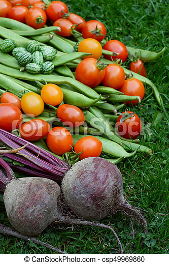 beetroot, tomaten, paarse , cucamelons, boontjes - csp49969860