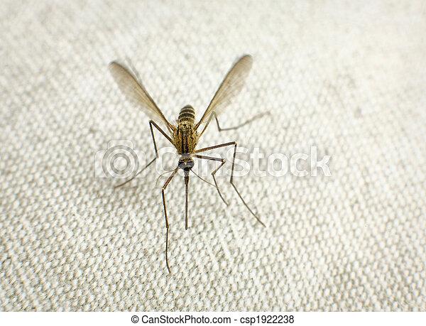 beißen, schwierig, moskito - csp1922238