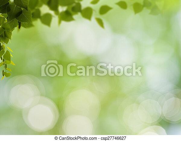 belleza natural, resumen, fondos, bokeh, follaje, abedul - csp27746627