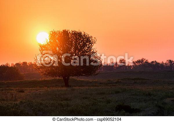bello, albero, silhouette, steppa, alba - csp69052104