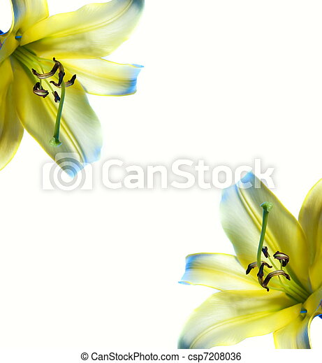 bello, astratto, lilly, cornice - csp7208036