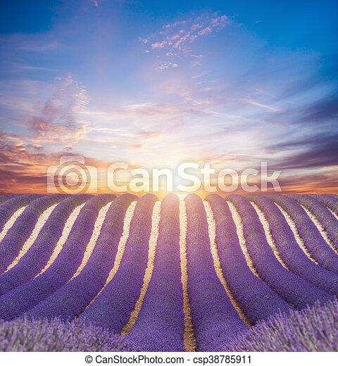 bello, campo, lavanda, paesaggio, azzurramento - csp38785911