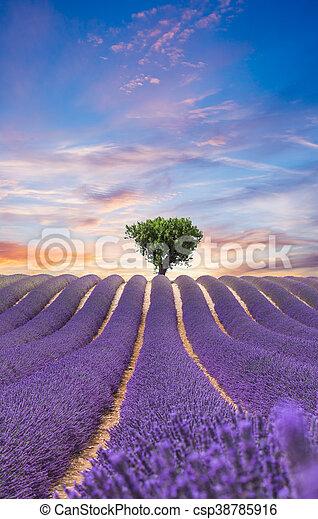 bello, campo, lavanda, paesaggio, azzurramento - csp38785916