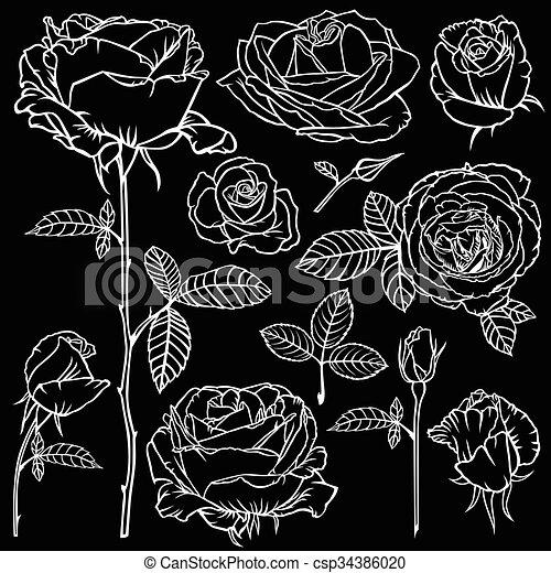 Bello Fiore Rose Set Sfondo Nero Contorno Bello Fiore