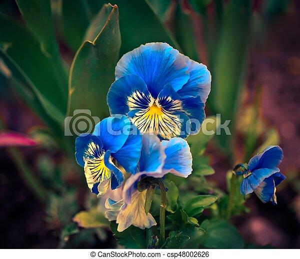 Fiori Blu.Bello Fiori Blu Delphinium Bello Blu Garden Estate