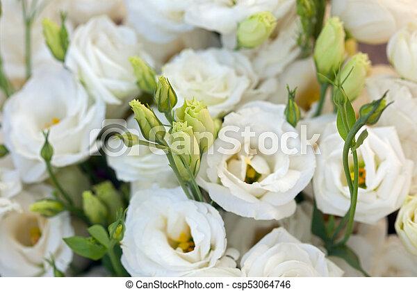 Fiori Lisianthus Bianchi.Bello Genziana Tulipano Fiori Fondo Eustomas Lisianthus