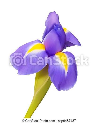 bello, iride, fiore, natura, disegno, vettore - csp9487487