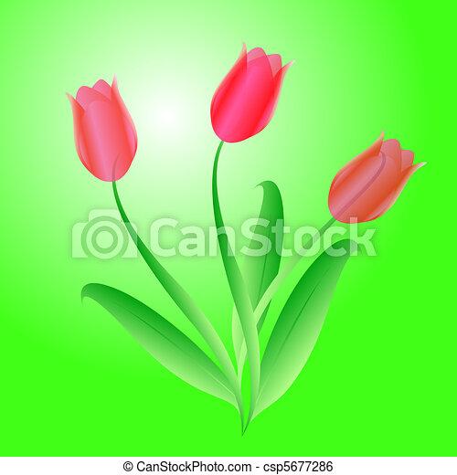 bello, mazzolino, vettore, tre, tulips - csp5677286