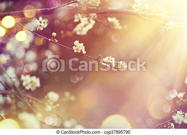 bello, natura, sole, azzurramento, albero, scena, bagliore - csp37895790