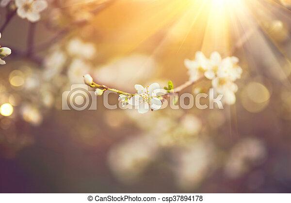 bello, natura, sole, azzurramento, albero, scena, bagliore - csp37894178