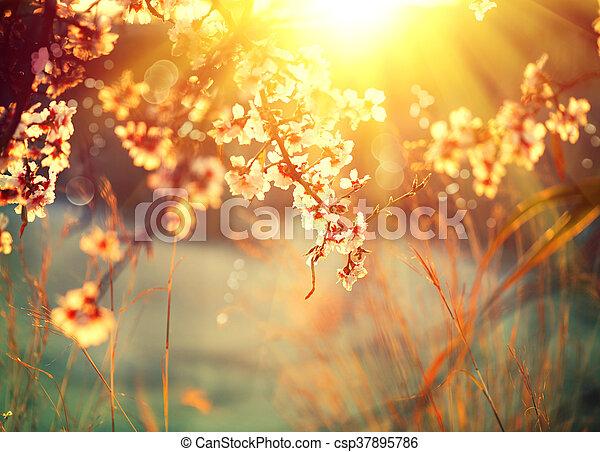 bello, natura, sole, azzurramento, albero, scena, bagliore - csp37895786