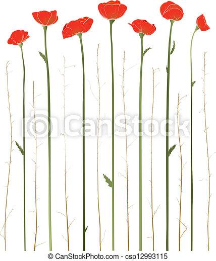 bello, rosso, illustrazione, papaveri - csp12993115