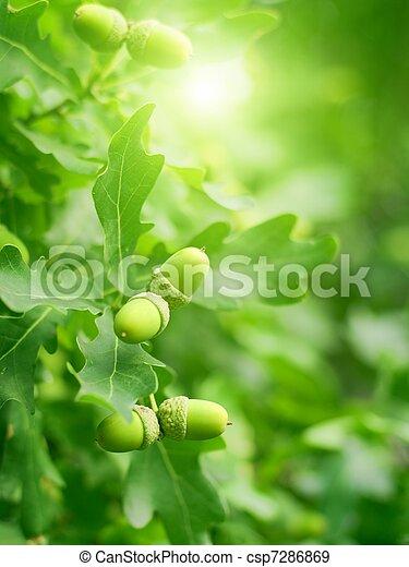 bellotas, hojas verdes, roble - csp7286869