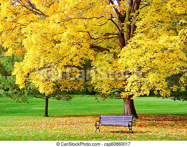 Bench and maple in city park in autumn - csp60860017