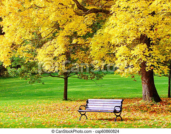 Bench and maple in city park in autumn - csp60860824