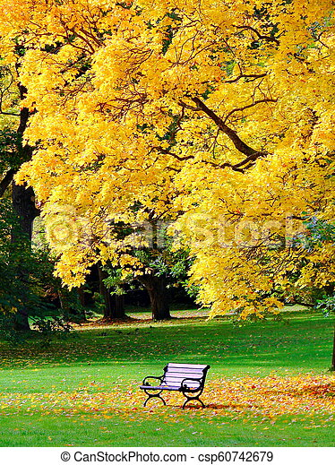 Bench and oak in city park in autumn - csp60742679