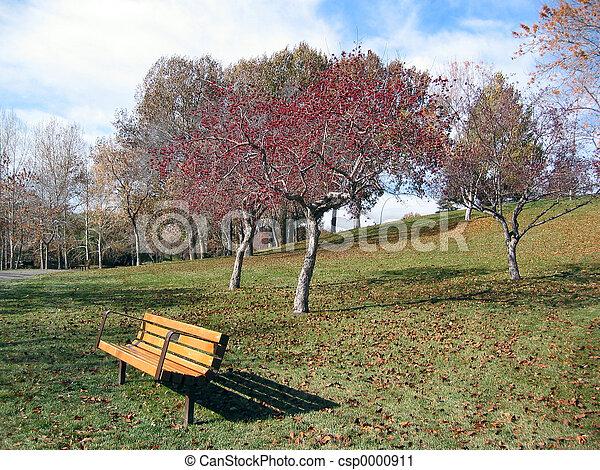 bench & flowering tree - csp0000911