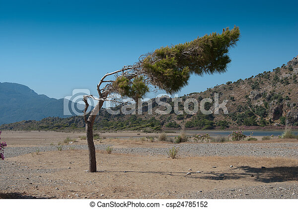 Bend tree - csp24785152