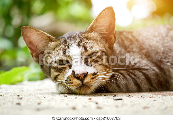 Bengal cat in Sleeping - csp21007783