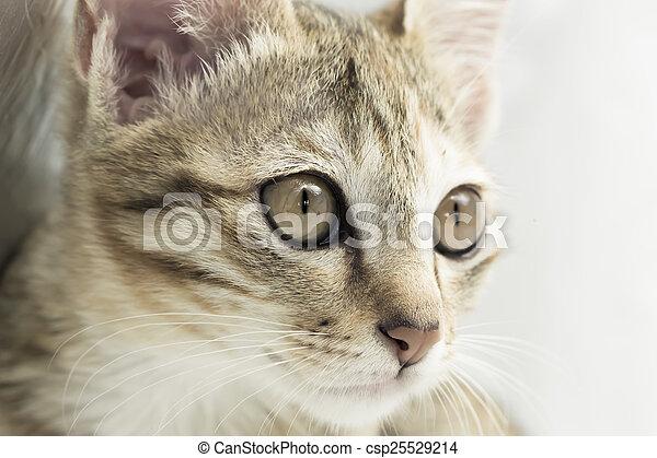 Bengal cat - csp25529214