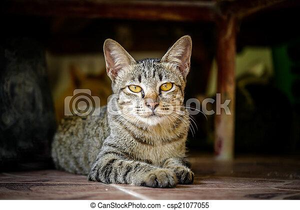 Bengal cat. - csp21077055