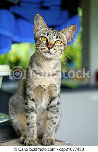 Bengal cat. - csp21077430