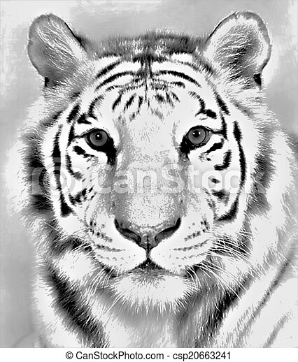 Bengal Tiger Drawing Drawing Of A Gorgeous Front Facing Bengal Tiger