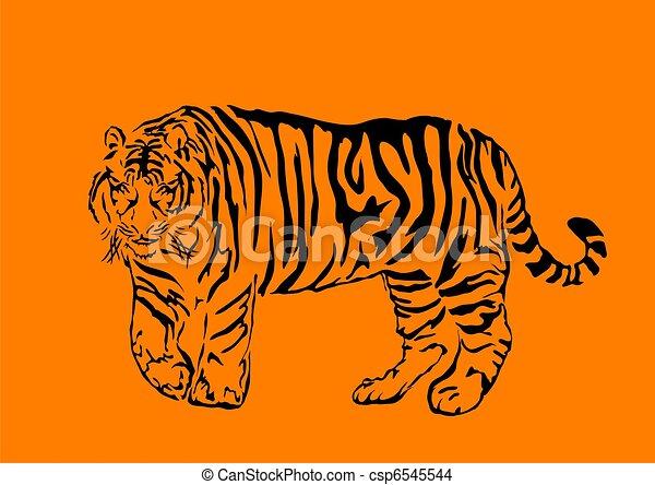 bengal tiger  - csp6545544