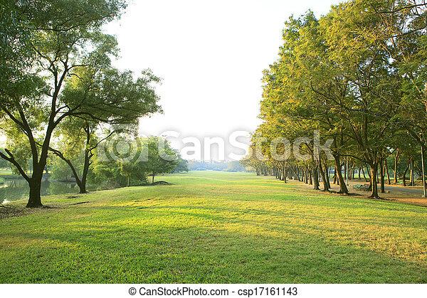 berendezés, fű, természetes, több célú, fény, általános világűr, liget, alkalmaz, fa, reggel, mező, zöld háttér, másol, vagy, háttérfüggöny - csp17161143