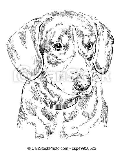 berg hond, hand, entlebucher, vector, verticaal, tekening. berg hond