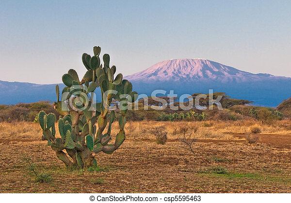 berg, kilimanjaro, sonnenaufgang - csp5595463