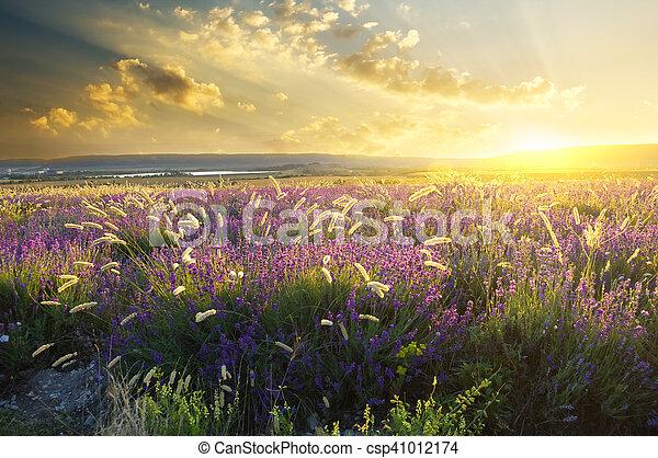 Sonne auf Sommerwiesen - csp41012174