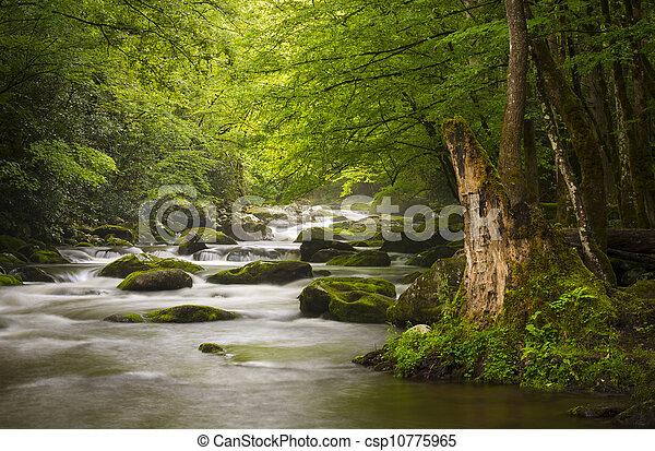 Friedlich große, rauchige Berge, Nationalpark, nebliger tremont-Flus, entspannende Naturlandschafts-Stücke bei Gatlinburg TN - csp10775965