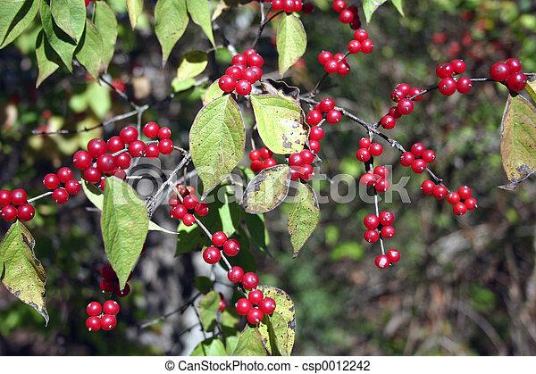 Berries 1 - csp0012242