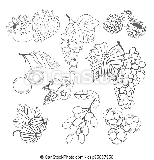 Berries Collection For Coloring Book