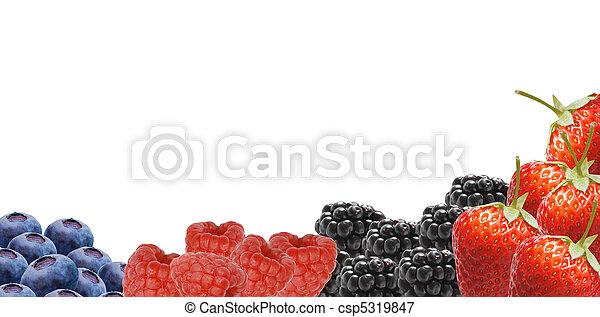 Berries - csp5319847