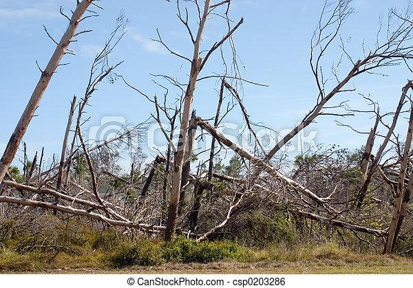 beschadigen, storm - csp0203286