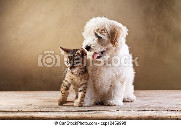 Best friends - kitten and small fluffy dog - csp12459998