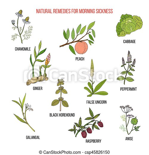 Best herbal remedies for morning sickness - csp45826150